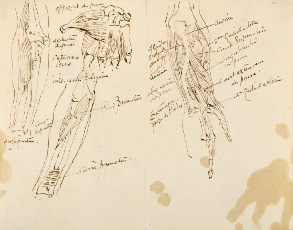 Anatomical sketches of body parts that are labelled.