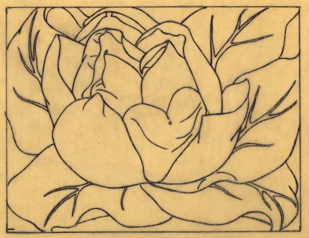 Line drawing of a magnolia flower.