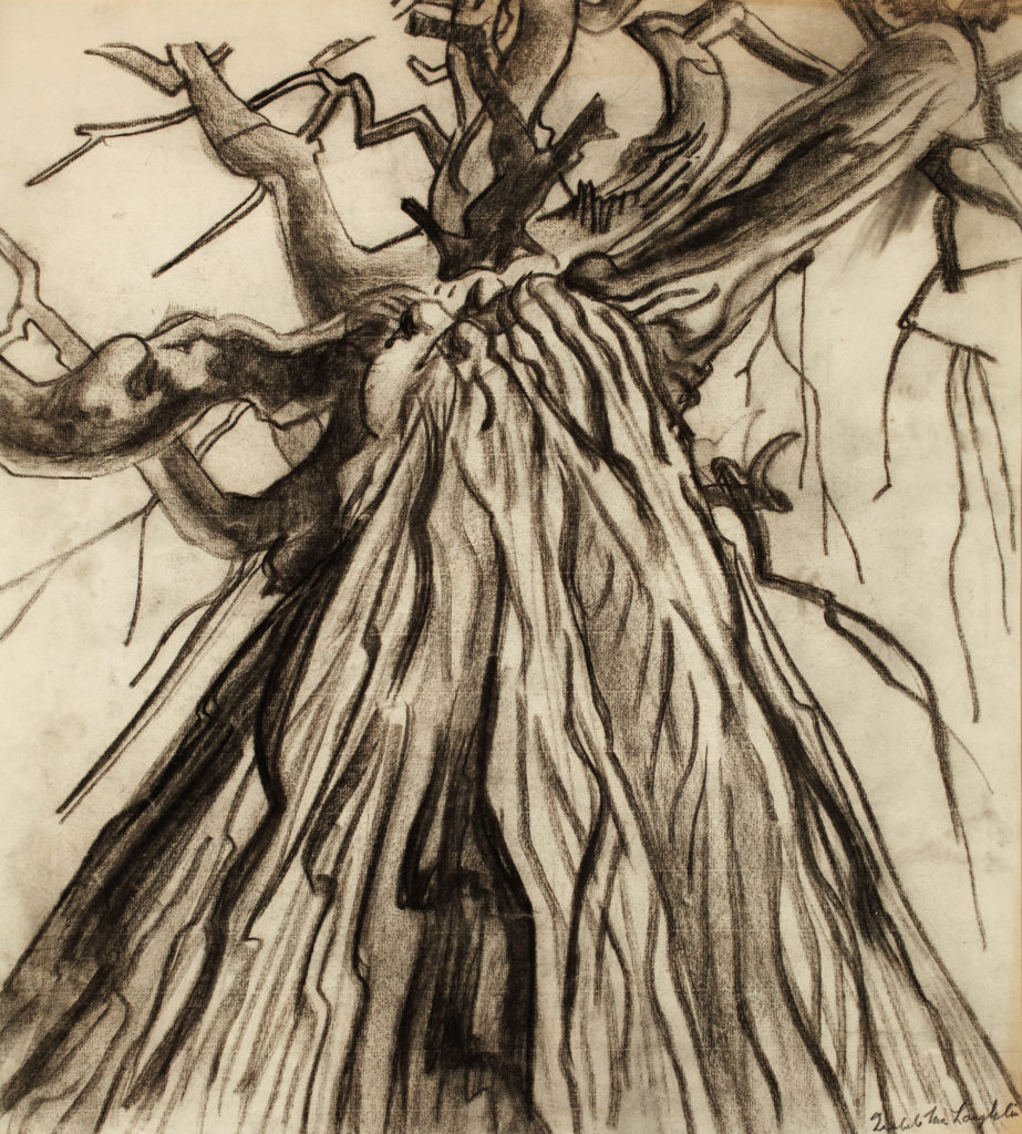 Charcoal sketch of a tree from ground perspective.